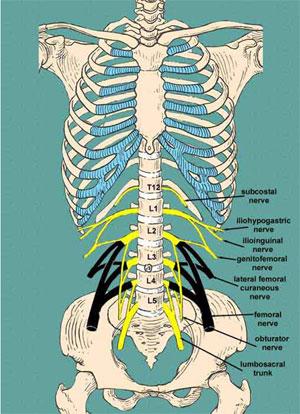 Sciatic pain smalling chiropractic center taos new mexico sciatica altavistaventures Images